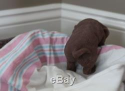 It's a LAB Puppy Girl! FULL SILICONE Bathable Life Like Reborn Newborn Baby Doll